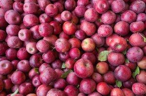 jablko-kostka_f